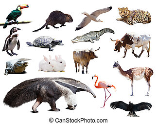 他, アメリカ, 動物, anteater, セット, 南