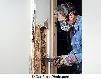 傷つけられる, 壁, 取り去る, シロアリ, 木, 人