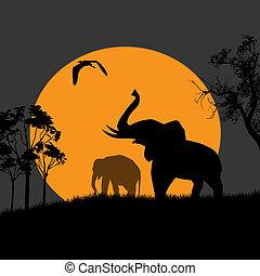 光景, 夜, シルエット, 象