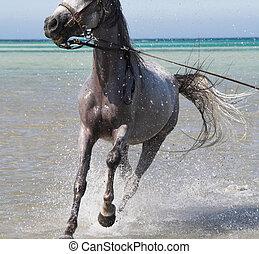 入浴, 馬