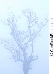 冬, はげ, 木, 海原, 霧, 下に