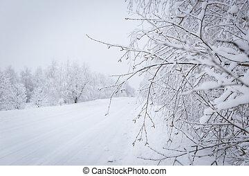 冬, ブランチ, 雪