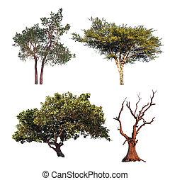 別, collection., 木, 隔離された, 木, 4, 白