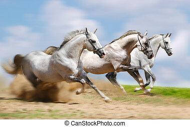 動くこと, 種馬, 3, 速い