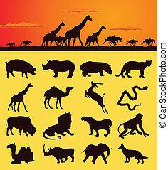 動物, アフリカ