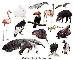 動物, 南アメリカ, セット, 他, anteater