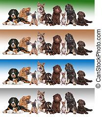 勾配, 背景, 多様, グループ, 子犬