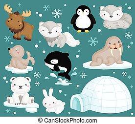 北極である, ベクトル, セット, 動物