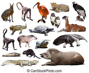 南アメリカ, 動物群, セット