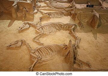 博物館, 考古学的
