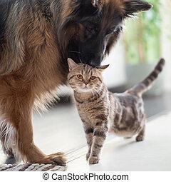 友情, 一緒に, ねこ, 犬, ∥間に∥, pets., indoors.