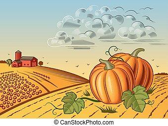 収穫, 風景, カボチャ
