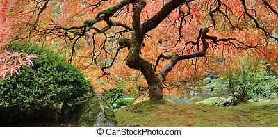 古い, パノラマ, 木, 日本語, 秋, かえで