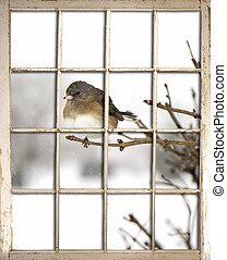 古い, 窓, -, 鳥, 窓ガラス