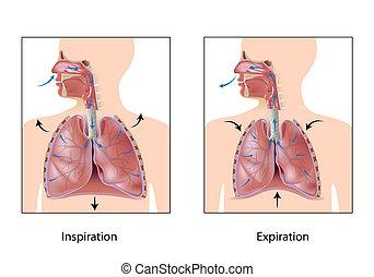 呼吸, eps10, 周期