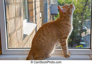 土台, 大きい, 座っている猫, 窓, 赤