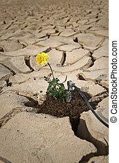 土壌, 割れた, 花, 潅漑, 黄色