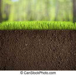 土壌, 草, 森林, 下に