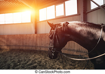 地位, 暗い, 馬, 黒, manege
