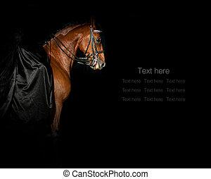 地位, purebred, 女性, 種馬, 暗い, 黒, 絹, 服, ライダー, concept:, manege