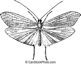 型, caddisfly, engraving.