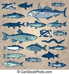 型, fish, セット, (vector)