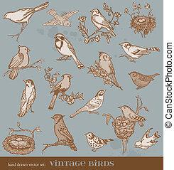変化, 型, -, 手, ベクトル, イラスト, 引かれる, 鳥, 鳥, set: