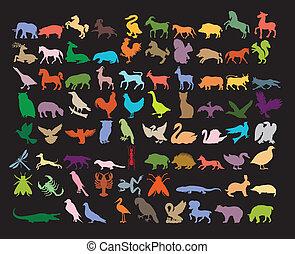 変化, animals., 大きい