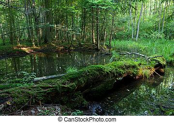 夏, 古い木, 壊される, 森林, 風景