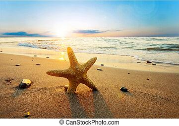 夏, 浜, 日当たりが良い, ヒトデ