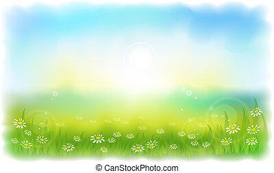 夏, 牧草地, daisies., sun-drenched, 日当たりが良い, outdoors., 日