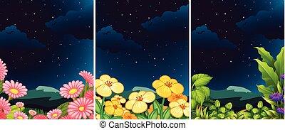 夜, セット, 花, 自然