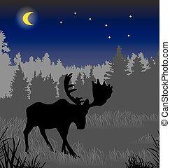 夜, 森林, オオシカ