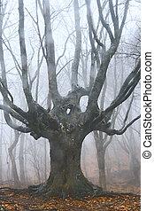 大きい木, 森林, 死んだ, 霧が濃い
