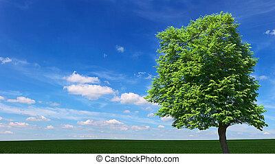 大きい木, 牧草地