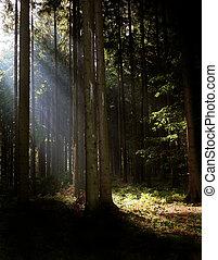 太陽は放射する, 木