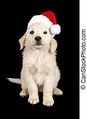 子犬, 黒, クリスマス, 背景