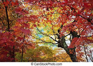 季節, かえで, 秋