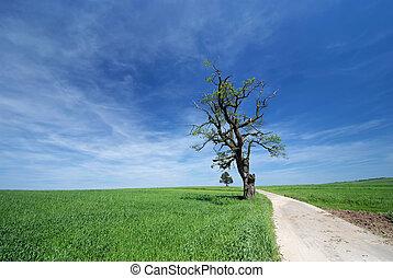孤独, 古い木, オーク, フィールド, 成長する, 前方へ, 道