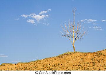 孤独, 木, はげ