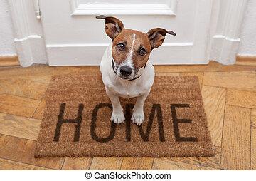 家, 歓迎, 犬