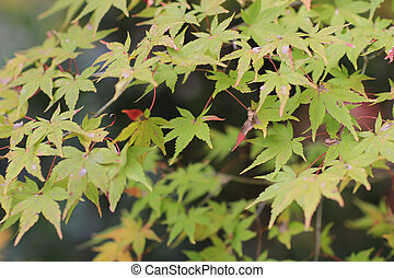 寺院, seiryuden, 季節, 秋, 日本の庭