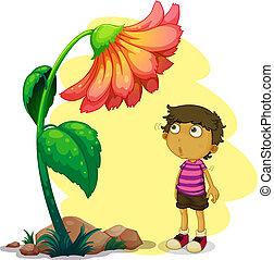 小さい 男の子, 花, 見る, 巨人