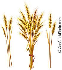 小麦, スパイク
