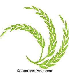 小麦, 緑