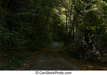 山が多い, 区域, 樹木が茂った, 土, 急, 坂, 道