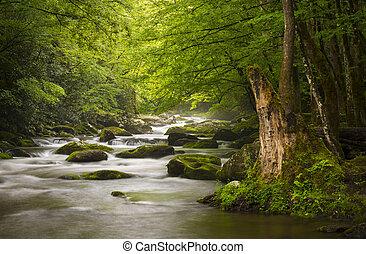 山, 偉人, 弛緩, 自然, 煙が多い, 公園, gatlinburg, tn, 平和である, 霧が濃い, tremont, 川, 国民, 風景, 光景