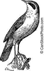岩, 型, とまった, さえずり鳥, engraving.