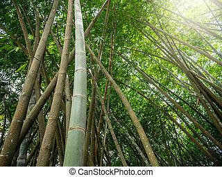 島, 美しい, イメージ, 太陽, によって, 熱帯 森林, 照ること, 竹, 密集している