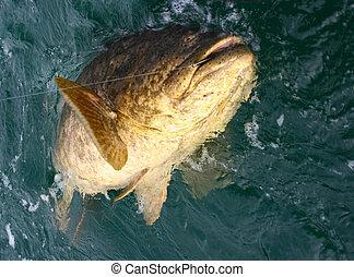 巨大, fish